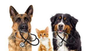 Save money on veterinary bills